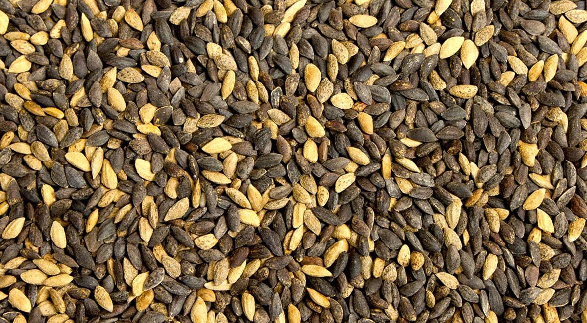 Pine seed