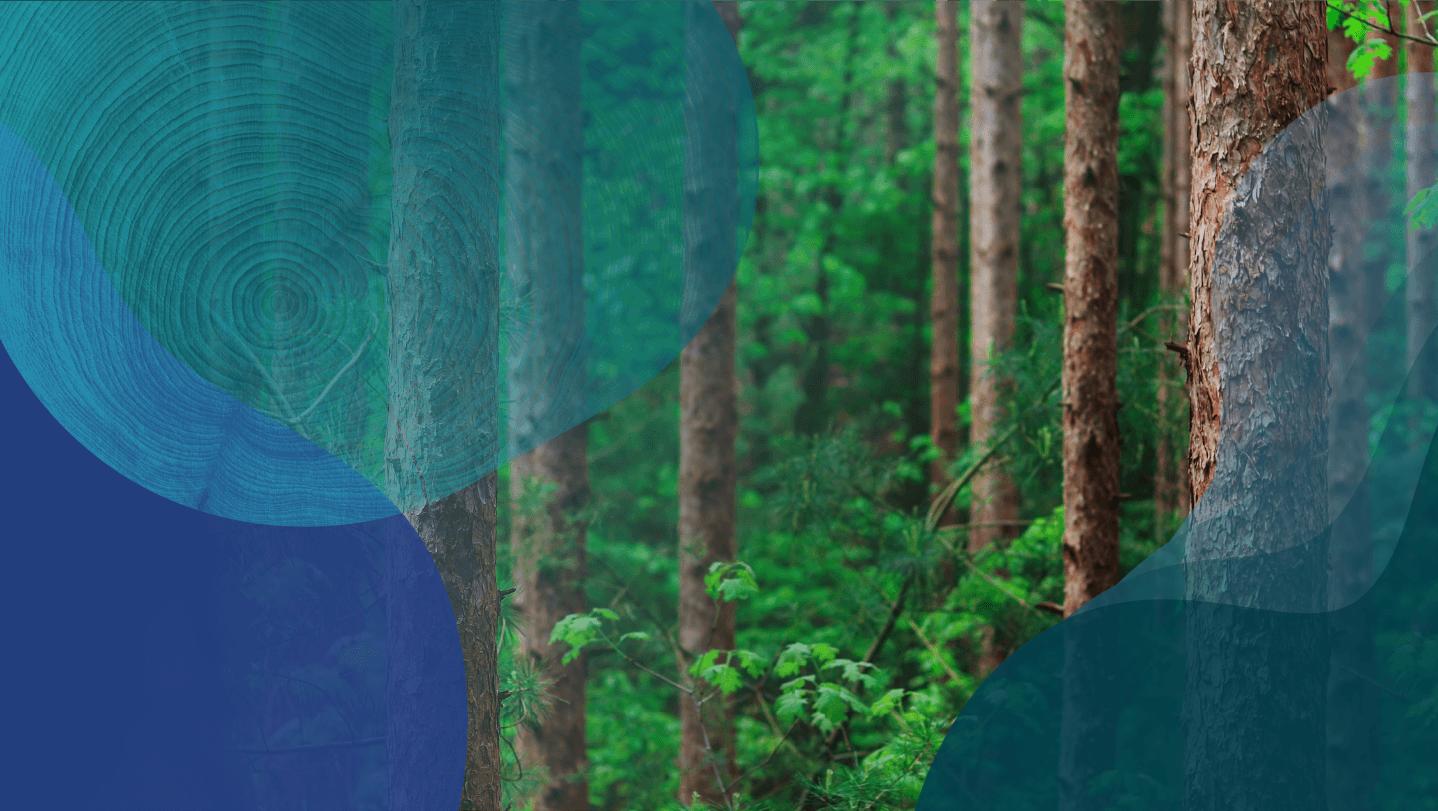 可持续的木纤维解决方案形象
