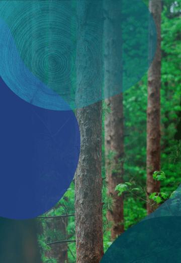 可持续的WoodFibre解决方案移动图像