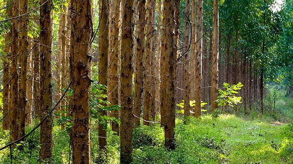 Sappi Forests on Plants Preschool