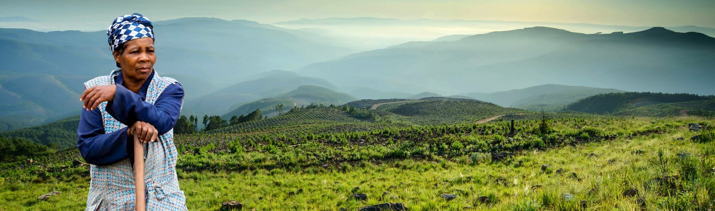Ensuring shared value throughout the forestry value chain